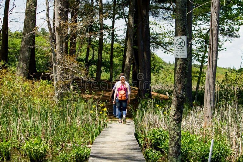 Camino de madera con tres personas que caminan en él en un día soleado con los árboles en el fondo fotografía de archivo