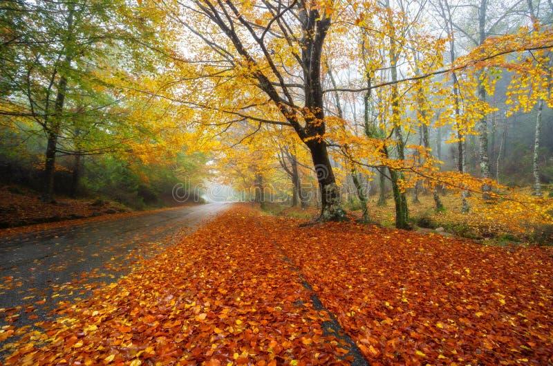Camino de Mata da Albergaria, otoño, Geres imagen de archivo libre de regalías