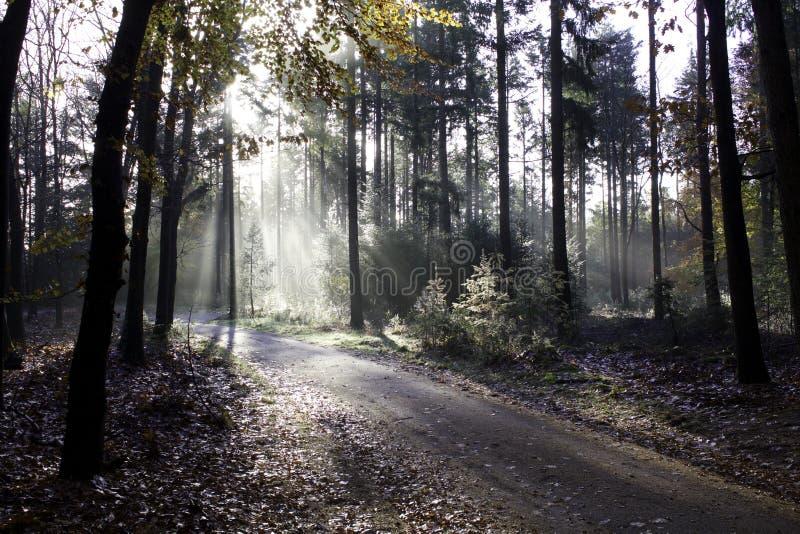 Camino de niebla imagenes de archivo