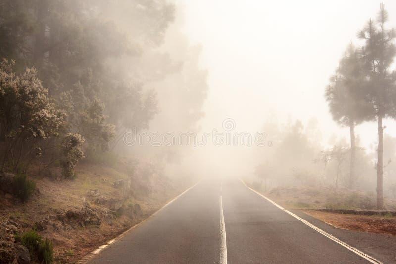 Camino de niebla en el bosque, calle en bosque brumoso fotos de archivo