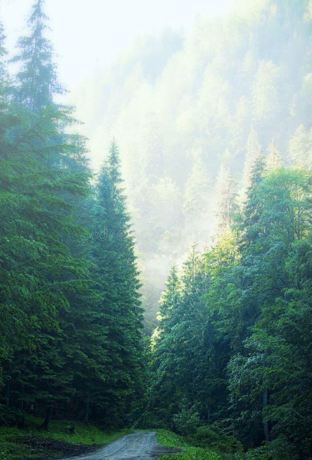 Camino de niebla por la mañana, bosque con una trayectoria brumosa, naturaleza misteriosa escénica del bosque hermoso del árbol d fotografía de archivo