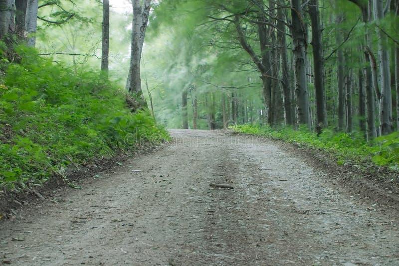 Camino de tierra en bosque foto de archivo