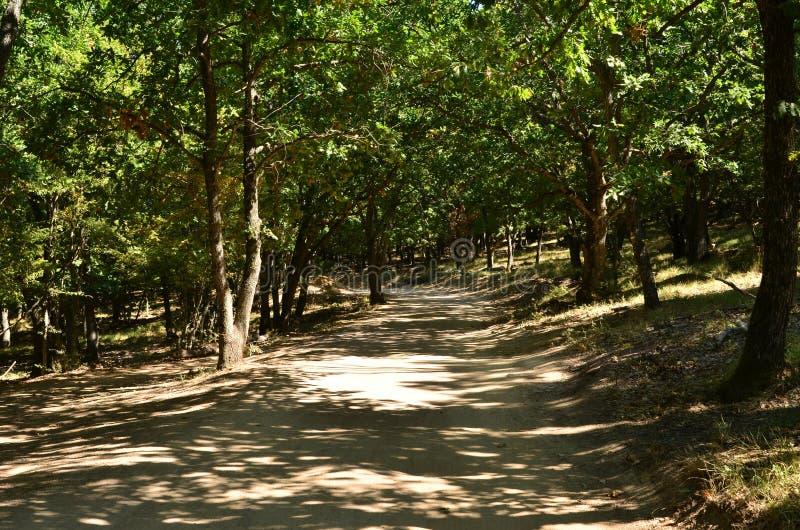 Camino de tierra en el bosque del verano fotos de archivo libres de regalías