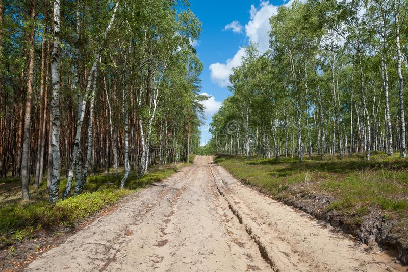 Camino de tierra en el bosque que sirve como ruta de la emergencia para los servicios de la autoridad en caso del fuego foto de archivo libre de regalías