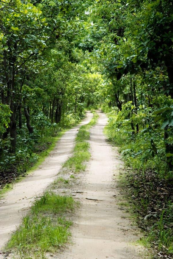 Camino de tierra en la selva imagen de archivo libre de regalías