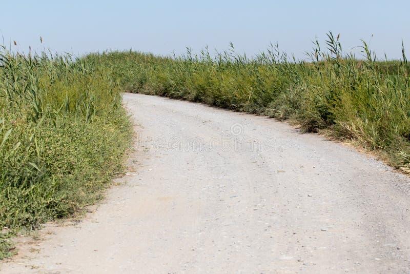 Camino de tierra en naturaleza imagen de archivo