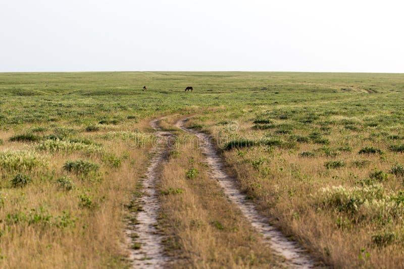 Camino de tierra en naturaleza imagenes de archivo