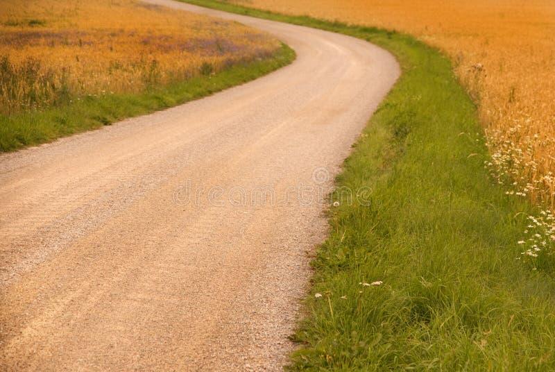 Camino de tierra en un campo de trigo foto de archivo