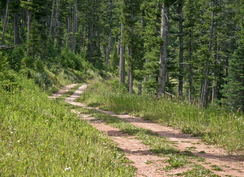 Camino de tierra estrecho de dos pistas fotos de archivo libres de regalías