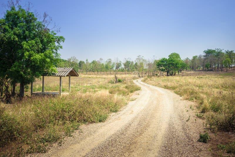 Camino de tierra hacia bosque foto de archivo libre de regalías
