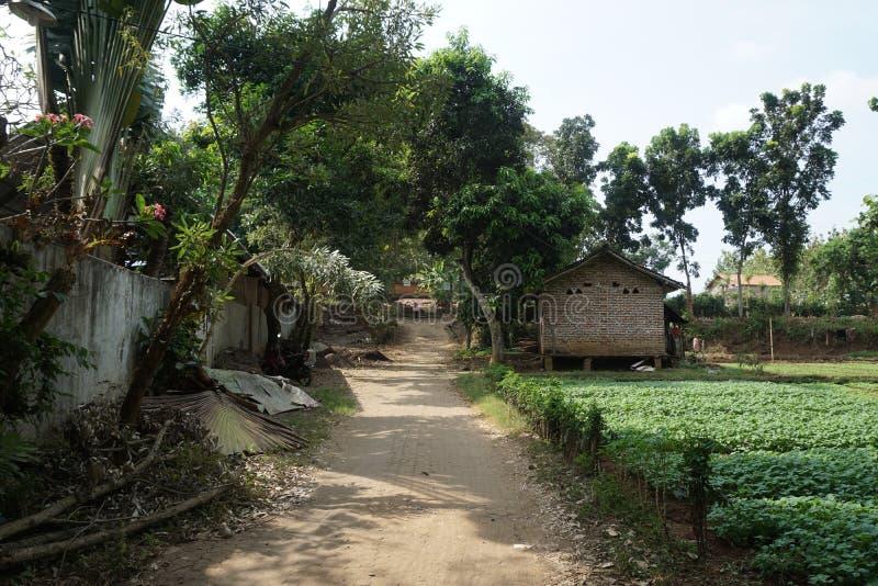 Camino de tierra tradicional del suelo entre los árboles en la granja de la espinaca en el pueblo de Javenese, Indonesia_1 imagen de archivo libre de regalías
