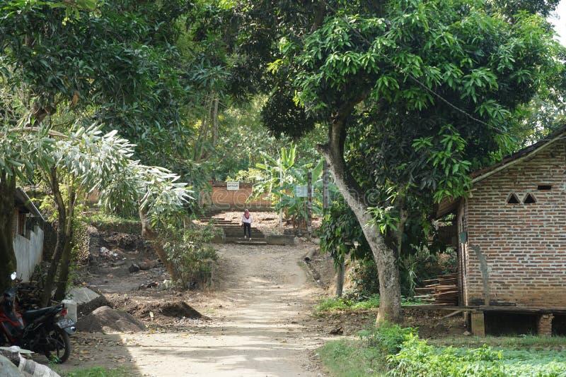 Camino de tierra tradicional del suelo entre los árboles en la granja de la espinaca en el pueblo de Javenese, Indonesia_1 imágenes de archivo libres de regalías