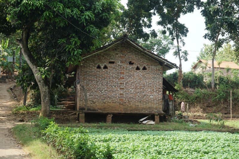 Camino de tierra tradicional del suelo entre los árboles en la granja de la espinaca en el pueblo de Javenese, Indonesia_1 fotografía de archivo libre de regalías