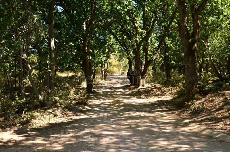 Camino de tierra a través del bosque fotografía de archivo