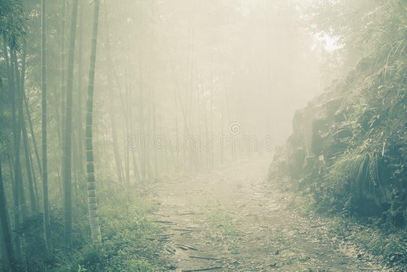 Camino de tierra a través del bosque de bambú en la mañana brumosa imagen de archivo