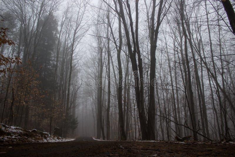Camino de tierra a través del bosque de niebla imagen de archivo libre de regalías