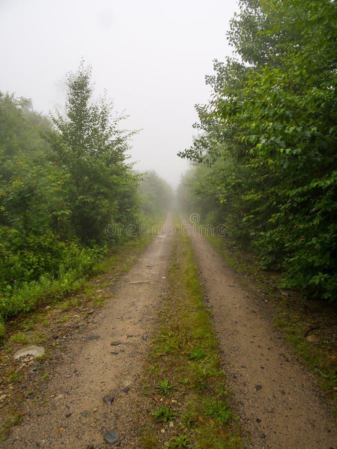 Camino de tierra a través del bosque de niebla en Maine fotos de archivo