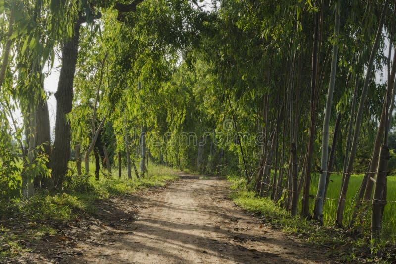 Camino de tierra y luz de la sol imagen de archivo libre de regalías