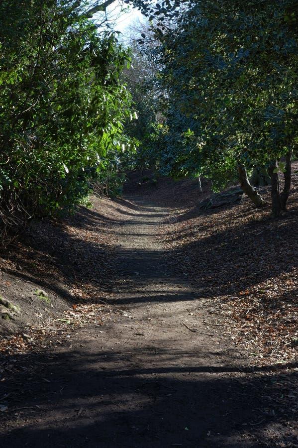 Camino del arbolado en el parque de Beaumont imagen de archivo libre de regalías