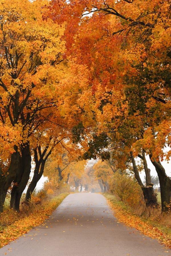 Camino del arce del otoño. fotografía de archivo libre de regalías