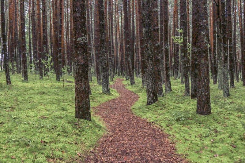 Camino del bosque imagenes de archivo