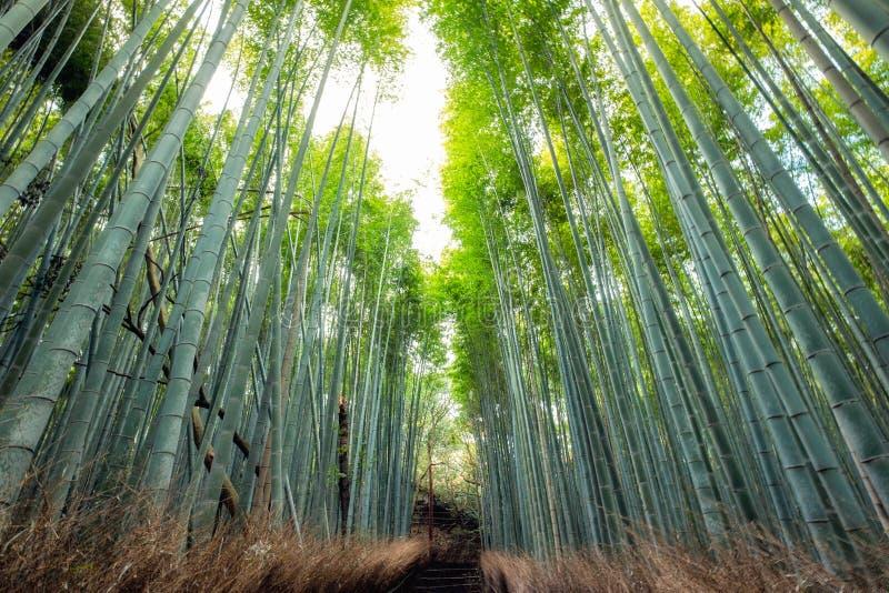 Camino del bosque de bambú sombrío con luz del sol foto de archivo libre de regalías