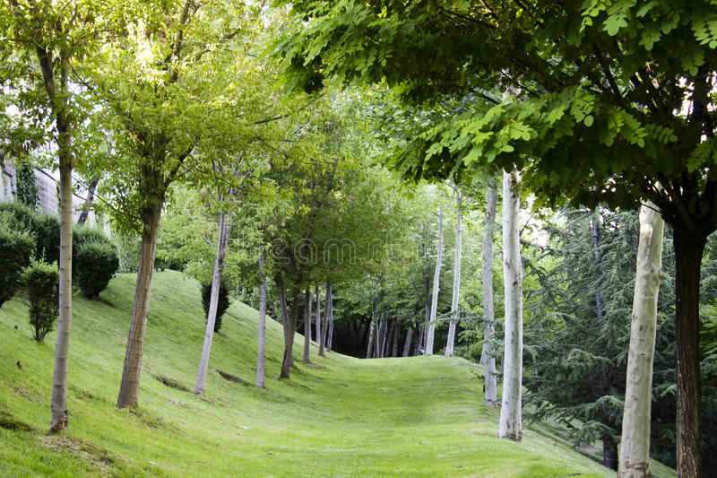 Download Camino del césped foto de archivo. Imagen de campo, claro - 41905352