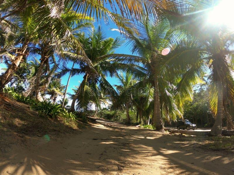 Camino del camino de las palmeras de la felicidad fotos de archivo