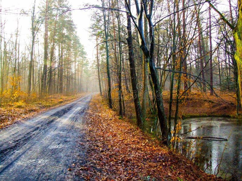 Camino del fango en el parque Krajobrazowy de Kozienicki en Polonia fotografía de archivo
