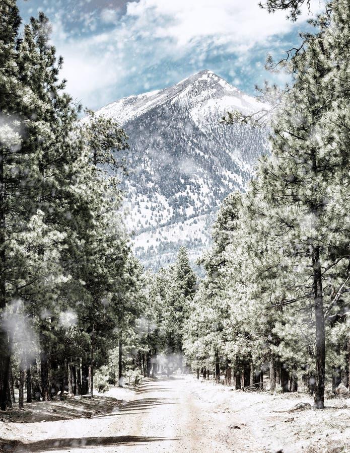 Camino del invierno al pico del ` s de Humphrey en la asta de bandera Arizona imagenes de archivo