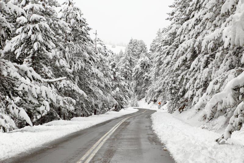 Camino del invierno con los árboles nevosos fotografía de archivo