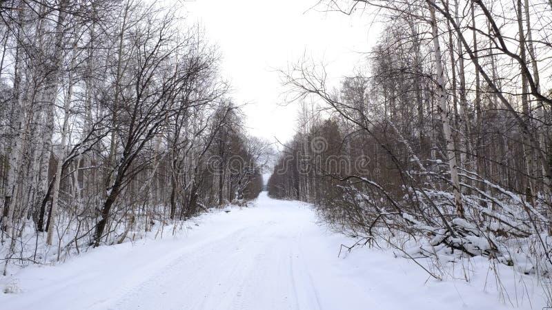 Camino del invierno en el bosque imágenes de archivo libres de regalías