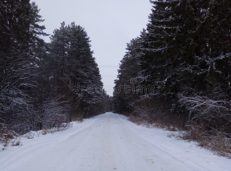 Camino del invierno en el bosque conífero nevoso para el papel pintado del fondo de los esquiadores foto de archivo