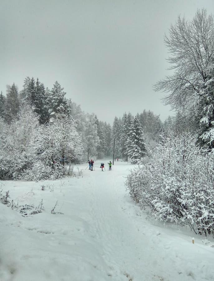 Camino del invierno en el bosque conífero nevoso para el papel pintado del fondo de los esquiadores fotografía de archivo libre de regalías