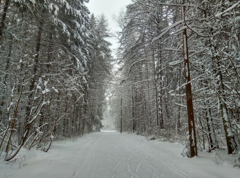 Camino del invierno en el bosque conífero nevoso para el papel pintado del fondo de los esquiadores fotos de archivo libres de regalías