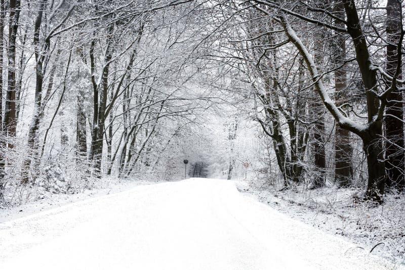 Camino del invierno en el bosque - fondo hermoso fotografía de archivo libre de regalías