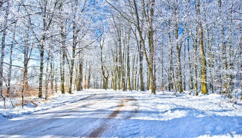 Camino del invierno en el campo sueco fotografía de archivo libre de regalías