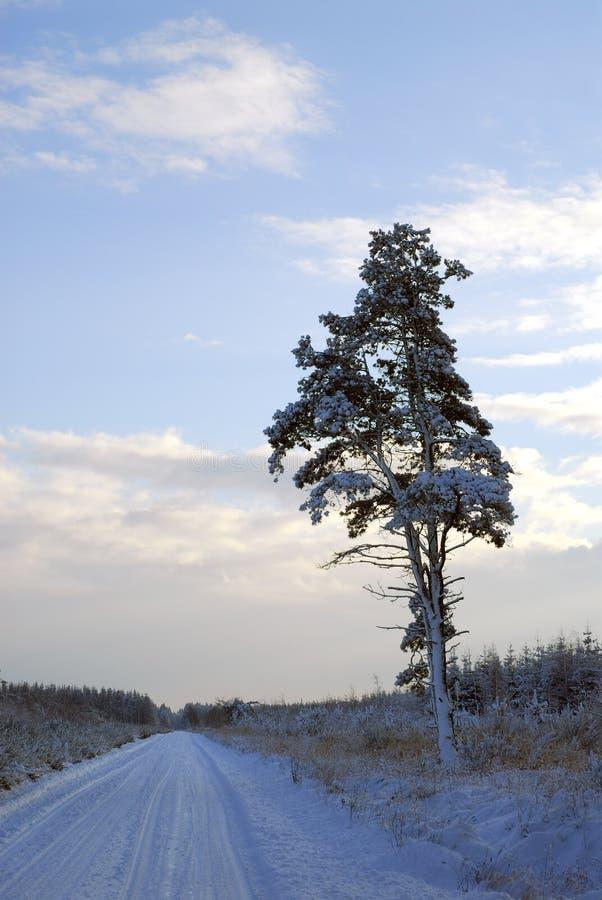Camino del invierno en la Navidad fotos de archivo