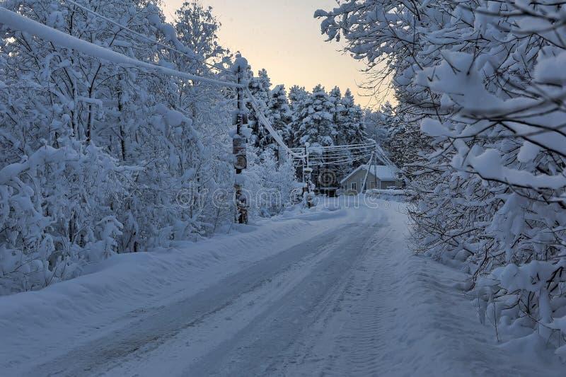Camino del invierno rodeado por los árboles fotografía de archivo
