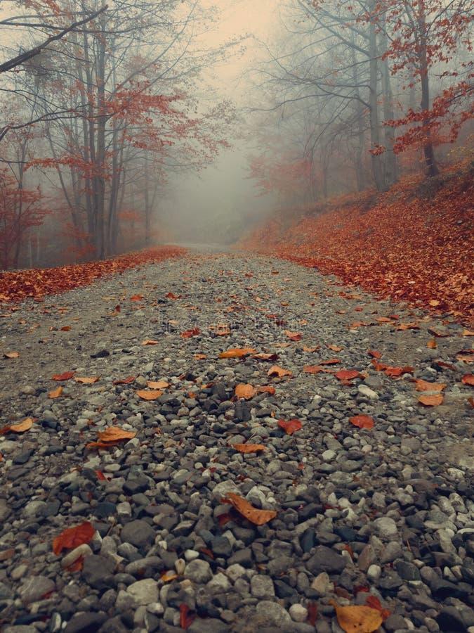 Camino del misterio en niebla azul otoñal del bosque de niebla imágenes de archivo libres de regalías
