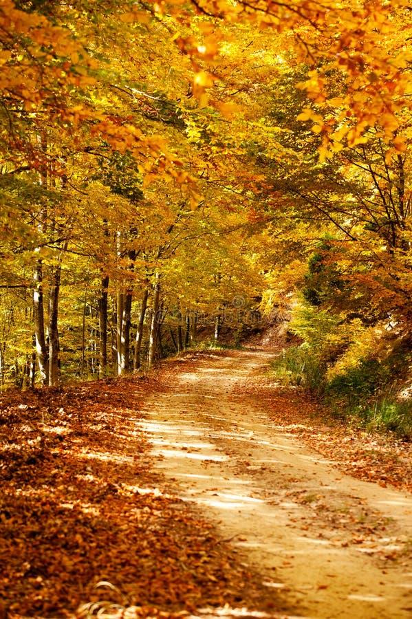 Camino del otoño foto de archivo