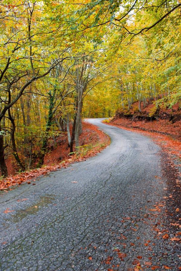 Camino del otoño del asfalto imagenes de archivo