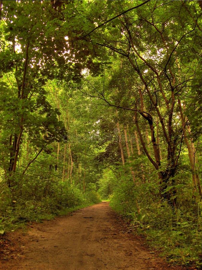 Camino del otoño en bosque imagen de archivo