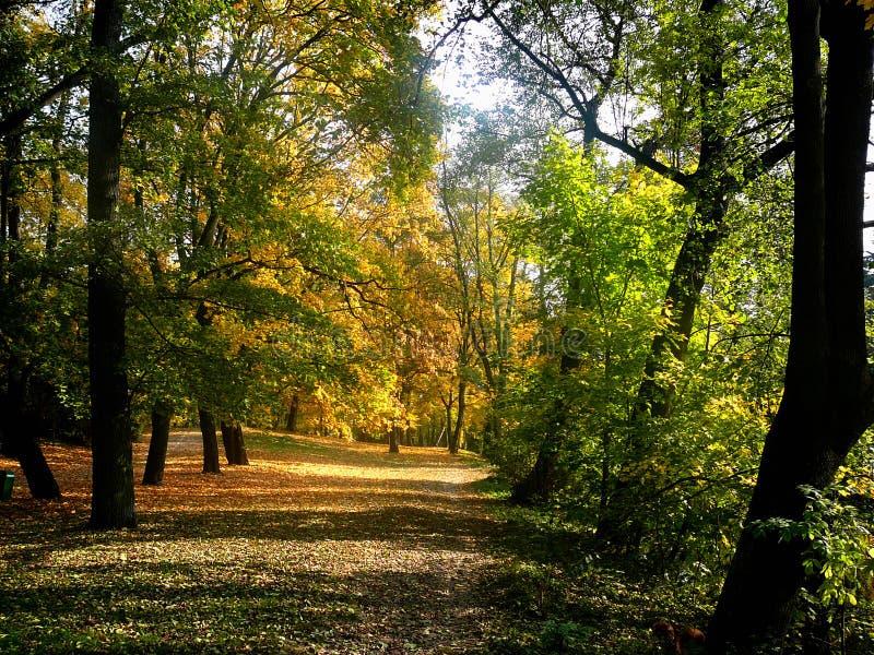 Camino del parque fotografía de archivo libre de regalías
