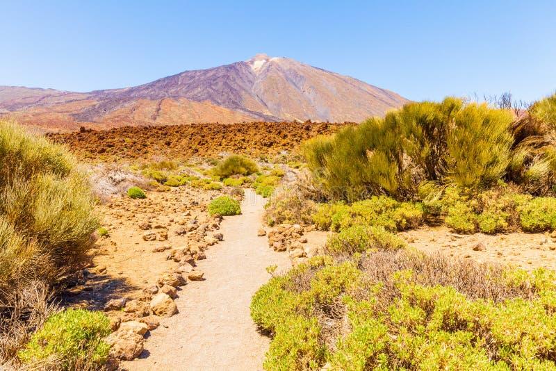 Camino del parque nacional de Teide imágenes de archivo libres de regalías