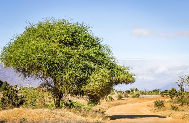 Camino del safari en Kenia fotos de archivo