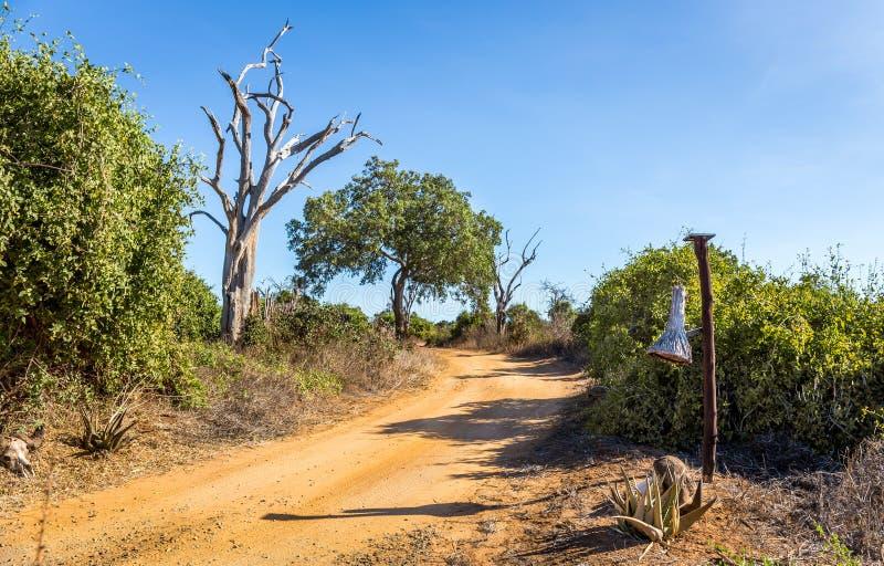 Camino del safari en Kenia fotografía de archivo libre de regalías