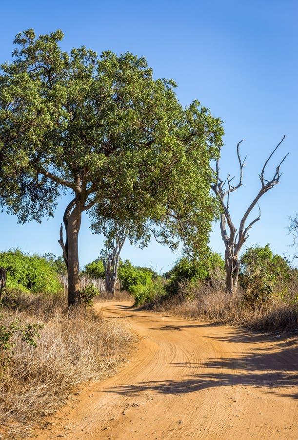 Camino del safari en Kenia imagen de archivo
