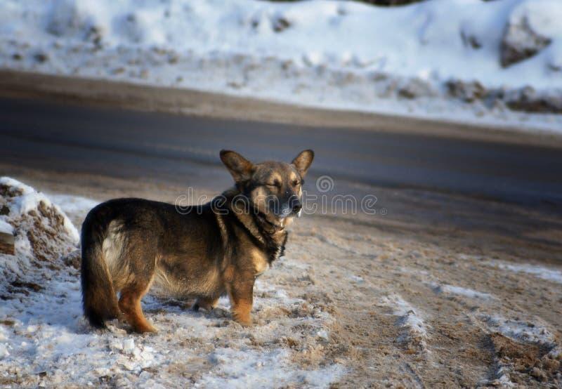 Camino divertido del invierno del ona del pequeño perro foto de archivo libre de regalías