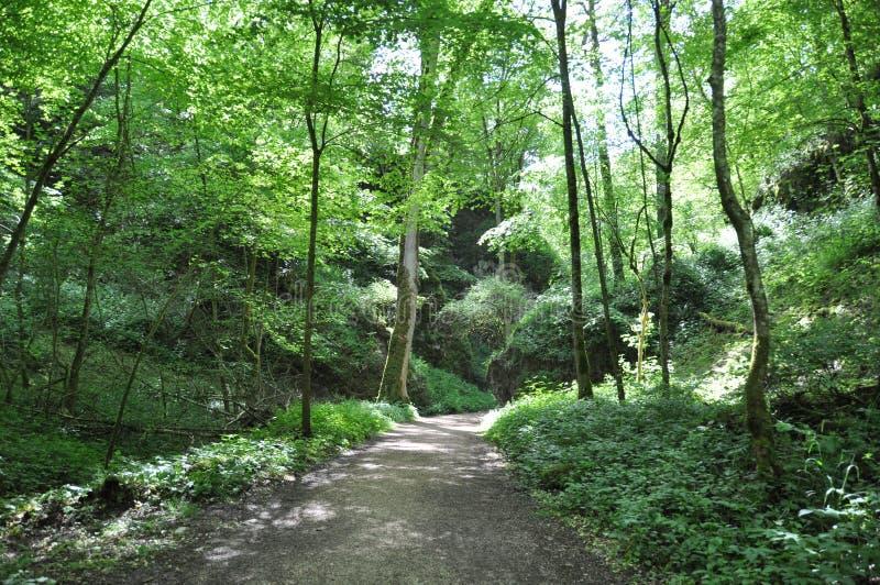 Camino en bosque fotografía de archivo libre de regalías